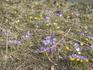 весна, первые цветы)