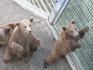 Медвежья яма.Мишки-гордость города