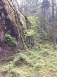 А здесь совсем другой лес - утесы и карабкающийся по ним лес.