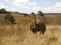 африканская природа
