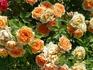 Св.Влас.Цветы