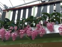 в каком то павильоне было много висячих растений!
