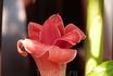 Красивый цветок? Может кто знает как он называется.