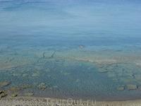 утренний заплыв в Ливийском море