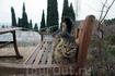 Крым невозможно представить без котов. Они везде и в большом количестве