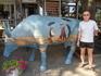 Коровы в Одессе пасутся прямо на Дерибасовской