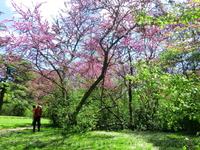 Весна - особое время для парка, здесь повсюду фотосессии, фотографируются влюбленные, семьи, дети.