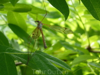 Комарово