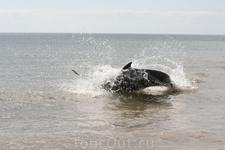Охотятся дельфины