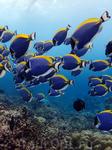 Рыбки в Баросе
