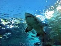 Акула уже рядом