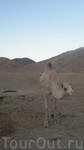 Верблюд, который никогда не ворчал) ОООчень хороший!