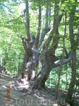 Сказочные деревья по дороге к водопаду