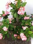 Цветы на Азорских островах