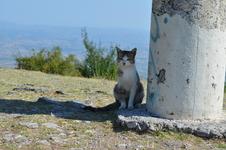 Олимпийский кот охраняет жертвенник с монетами