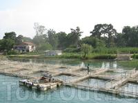 на горной реке Манавгат часто встречаются рыбные заводы. Этот специализируется на форели.