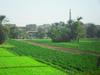 Первая поездка в Египет, экскурсия Луксор