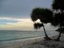 Одинокая пальма на берегу.))))))