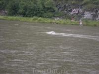 Местные рыбаки перевернули лодку -  вылавливали их из реки...