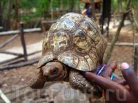 на Призон-айленде есть черепахи разного размера