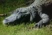 На крокодильской ферме. Интересно, кто за кем наблюдает?