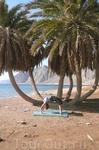 Йога на побережье. Урдхва дханурасана.