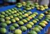 Повсеместно  выложены плоды бетеля, поедание которого – здешняя традиция, это местная лёгкая дурь.