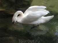 Воронцовский парк. Форельное озеро