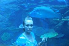 ОАЭ/Дубай ТЦ Дубай Мол. В нем сделан огромный аквариум в виде туннеля. Идешь по нему а над головой  проплывают зубастые акулы, огромные скаты и другие ...