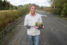 Попытка стащить карельский мох на Ленинградскую землю. Весной узнАем, прижился ли на даче. Грибы + МОХ
