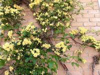 Стены увиты плетущимися розами.