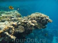Кораллы и глубина...