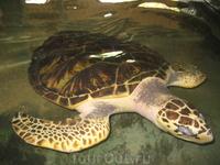 Взрослый черепаха - Черепашья ферма