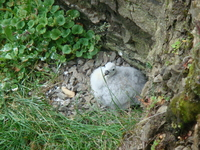 У птичьих скал на берегу Атлантики наблюдали их гнездовья