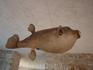 Башка Вода - экспонат музея морских обитателей