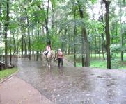 Всадник под дождем