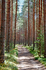 Лес в окрестностях усадьбы.