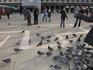 Венецианские нахальные голуби!