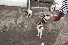 Греция- кошачья страна! Кошки там на каждом шагу)