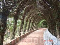 Вот такой тоннель сделаный из лианн. Вдоль него тянется мраморная скамейка. Можно присесть, отдохнуть в тени зелени