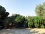 За деревьями видна арка Адриана и остатки храма Зевса.