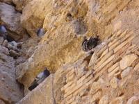 В старинной стене нашли убежище городские голуби
