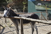 Разнообразие животного мира на Родосе, представленное на страусинной ферме и зоопарке