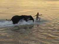 Этих слонят почти каждый вечер приводили купаться на наш пляж. Очень позитивно)