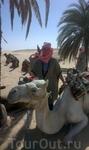 мой большой белый верблюд