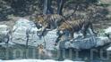 Лесной зоопарк, Далянь