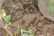крабик водится в речке рядом с гостиницей