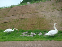 Мамуля и папуля зорко следят за своими птенчиками, и подгоняют их, если надо...