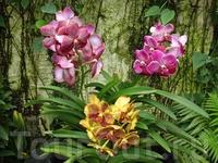 здесь насчитывается ок. шестидесят тысяч разновидностей орхидей