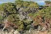 Еще живые кипарисы богаты зеленой листвой, мертвые стоят застывшими силуэтами, их отбеленные и изогнутые ветви красны от водорослей.